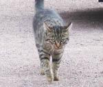 フランスノルマンディ地方ボーモン村の猫